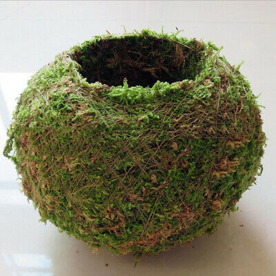 Natural Dry Moss Ball Bonsai Sphagnum Moss Planting Ball Flowerpot 6cm/2.3""