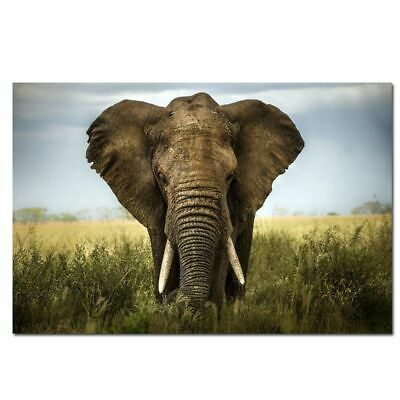 ANIMAL PHOTO ELEPHANT AFRICAN POSTER WALL ART PRINT PICTURE  LF2878