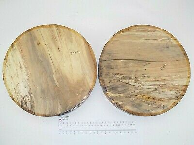 2 English Spalted Beech woodturning or carving bowl blanks.  305 x 42mm. 3982A