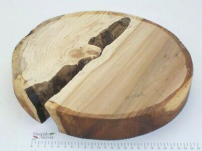 English Elm woodturning or wood carving bowl blank.  305 x 44mm. 3985A