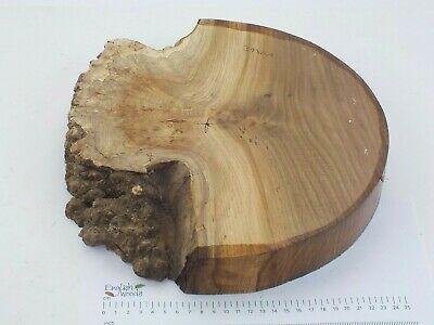 English Burr Elm woodturning or wood carving bowl blank.  330 x 45mm. 3986A