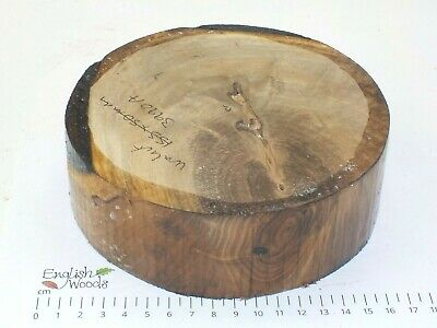 English Walnut woodturning or wood carving bowl blank.  155 x 50mm. 3990A