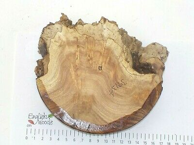 English Burr Elm woodturning or wood carving bowl blank.  155 x 44mm. 3993A