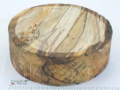 English Spalted Beech woodturning or wood carving bowl blank. 205 x 67mm.  3994A