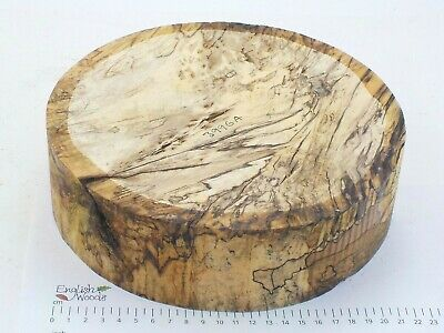 English Spalted Beech woodturning or wood carving bowl blank. 230 x 67mm.  3996A