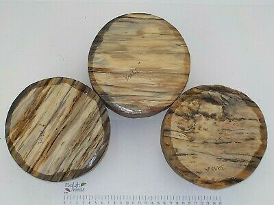 3 Punky English Spalted Beech woodturning carving bowl blanks. 155 x 68mm. 3998A