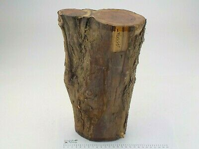 English Crotch Yew woodturning or carving log blank.  130 x 305mm.  4009A