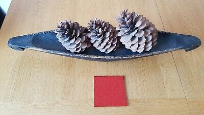 Large fir cones Display