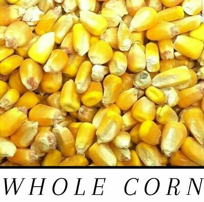 Whole Raw/Re-CLEANED Corn Animal Feed or Arts & Crafts Choose Size FREE SHIPPING