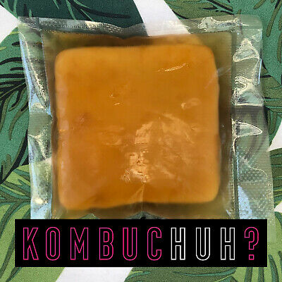 Overstocked! Kombucha Scoby, Organic 150mL Starter & Instructions, Free Delivery