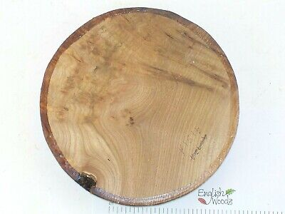 English Burr Burl Elm woodturning or wood carving bowl blank. 230 x 44mm. 4131A