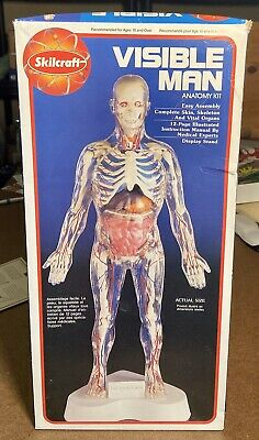 Vintage 1994 VISIBLE MAN Anatomy Model Kit By Skilcraft, New Pieces Sealed
