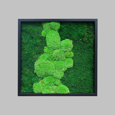 Picture made of pillow and flat moss in a 52x52cm black wood   Green Wall Art