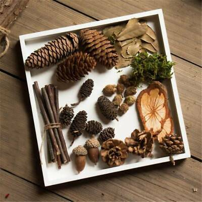 Natural Dried Pine Cone Handmade Material Package Micro Landscape Photo Props LH