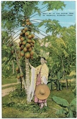 Meet Me at the PaPaw Tree in Tropical Florida PawPaw Vintage Postcard Fl Linen