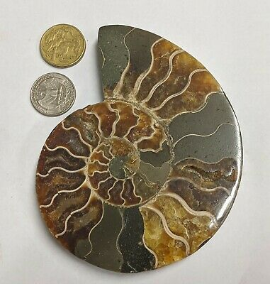 Large 125mm Polished Cretaceous age AMMONITE FOSSIL From Madagascar (#L3100)