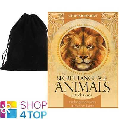 The Secret Language Of Animals Oracle Deck Cards Blue Angel With Velvet Bag New