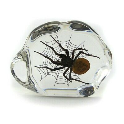REAL Brown Recluse type Spider in Web Resin embed Decor Paperweight