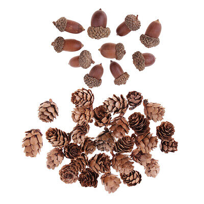Lots 40 Mixed Dried Pine Cone Acorn Art Craft Supplies Home Ornament Props