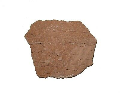 Anasazi Lost Tribe indian pottery shard 1000 yrs old corrugated scale Large #2