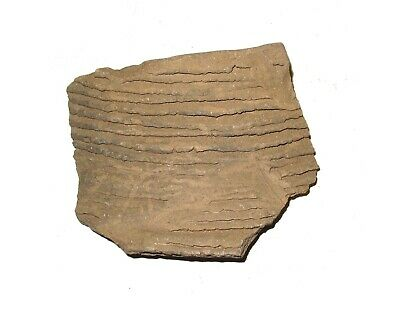 Anasazi Lost Tribe indian pottery shard 1000 yrs old corrugated scale Large #3