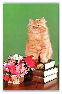 Postcard Red Tabby Persian Kitten Cat sitting on stack of books flowers  A47