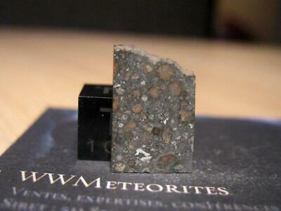 Meteorite NWA 10289 - Nice CV3 carbonaceous chondrite - Red, Black, and White...