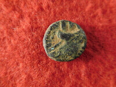 Ancient Greek Coin - Phoenicia, Arados - 2nd-3rd century BC (20C2)