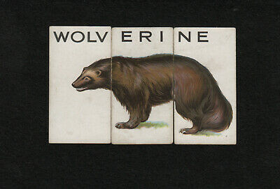 """s1937)    1934 WILLS CIGARETTE CARDS  ANIMALLOYS (Set of 3)  """"WOLVERINE"""""""