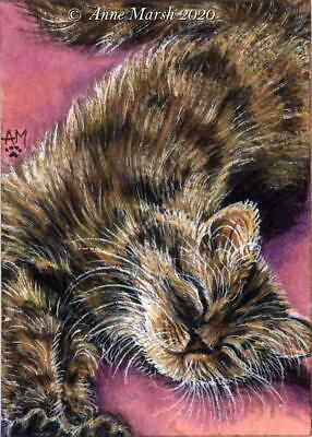 ACEO Original Animal Painting Tabby Kitten Cat Time To Relax Anne Marsh Art