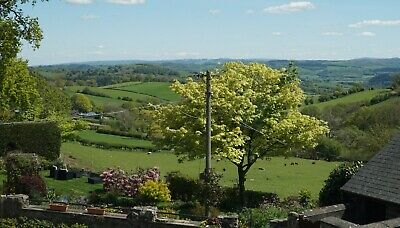 Late Deal - 5* Cyfie Farm, Shepherd's Watch Cottage, Hot Tub, Sleeps 4