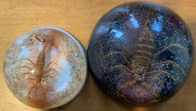 Lot Of 2 Vintage Scorpion Domed Lucite Paperweights