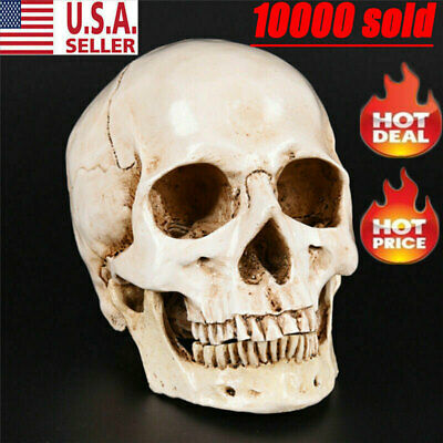 Retro Realistic Human Skull Replica 1:1 Resin Model Medical Art Teach Life Size