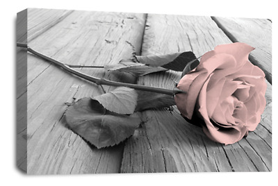 Floral Rose Wall Art Pink White Grey Canvas Flowers Picture Panel Set A