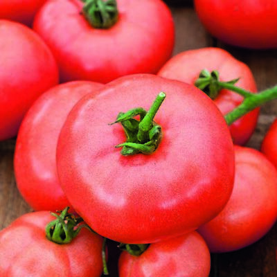 /'KINGS/' PREMIER QUALITY CHERRY GARDENERS DELIGHT tomato seeds 586 120 seeds