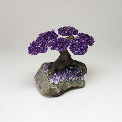 Small Amethyst Clustered Gemstone Tree on Amethyst Matrix (The Protection Tree)