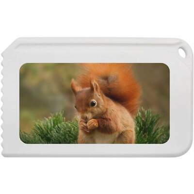 'Red Squirrel' Plastic Ice Scraper (IC00004843)