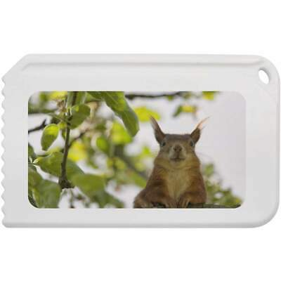 'Red Squirrel' Plastic Ice Scraper (IC00007055)