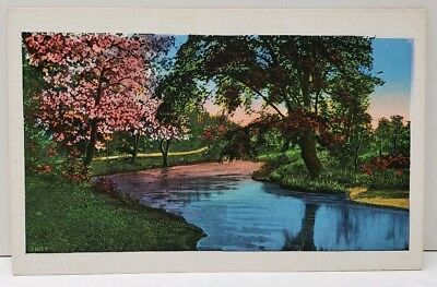 Art Series 1029 Colorful Trees on the Water 36035 Postcard A7