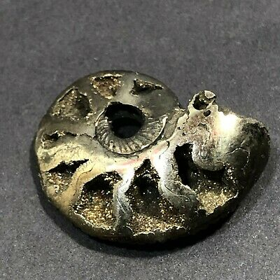 "Ammonite Fossil Geode Nautilus 1.25"" Gray Sparkly Necklace Pendant Bead"