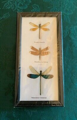 3 Real Nicely Mounted And Shadowbox Framed Dragonflies, New