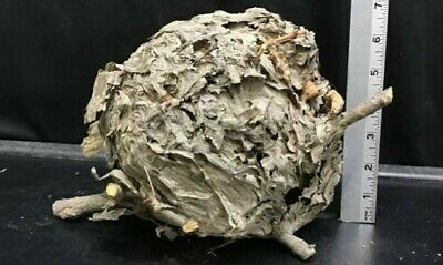 Natural/Real Paper Wasp Hive/Nest Cabin Decor, Taxidermy, Science