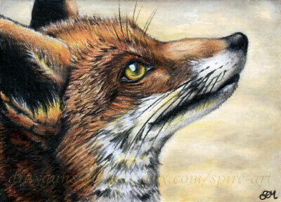 Red Fox Print Fierce eyes ACEO Limited Edition Gift for animal lovers