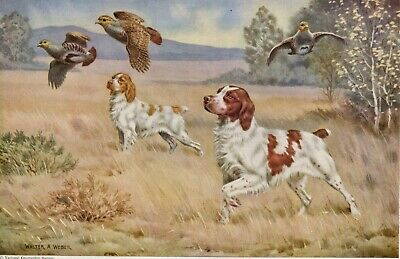 BRITTANY SPANIEL DOGS by WALTER A WEBER 1947 Art Print