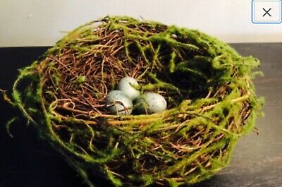 "5 1/2"" Mossy Spring Birds nest with spotted green blue eggs"