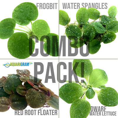 Aquarium Floating Plant Combo Pack! (Frogbit, Red Root, Water Lettuce, Spangles)