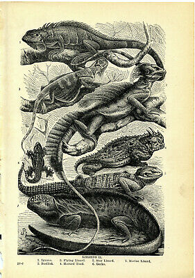 Antique 1913 Lithograph~LIZARD2
