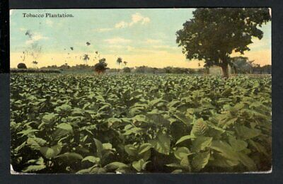 USA - 1911 Vintage Postcard Richmond - Tobacco Plantation