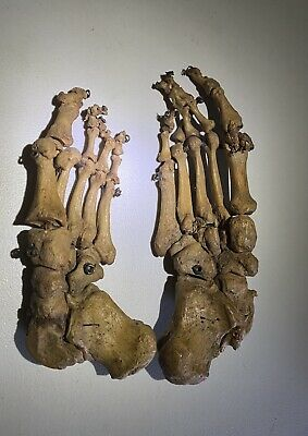 (2) Vintage Human Bones Articulated Real Wire-Strung Foot Feet Antique Medical