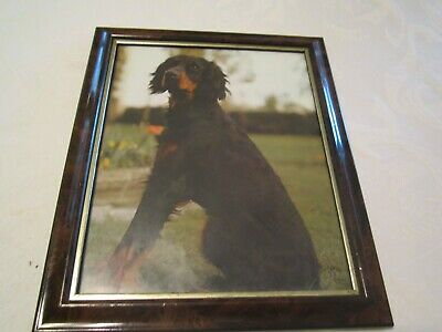Gordon Setter Framed Color Picture Print - Dog Canine